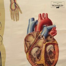 Medische schoolplaat
