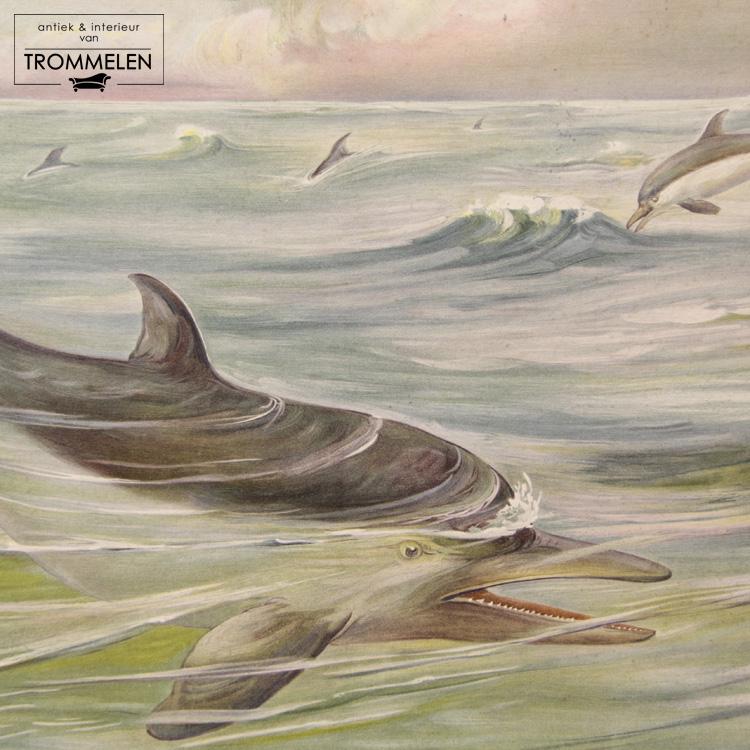 Dubbelzijdige schoolplaat: dolfijn / koe