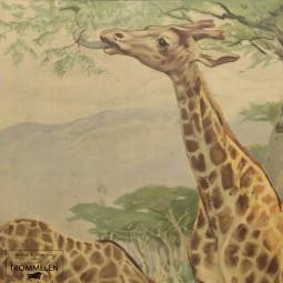 Antieke schoolplaat: giraffe