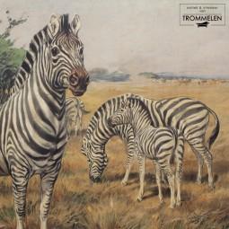 Antieke schoolplaat: zebra