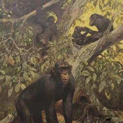 Dubbelzijdige schoolplaat: chimpansee / onderwaterleven