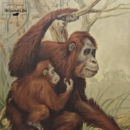 Dubbelzijdige schoolplaat: orang oetan / onderwaterleven