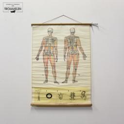 Schoolplaat skelet