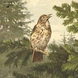 Dubbelzijdige schoolplaat: zangvogels / egels
