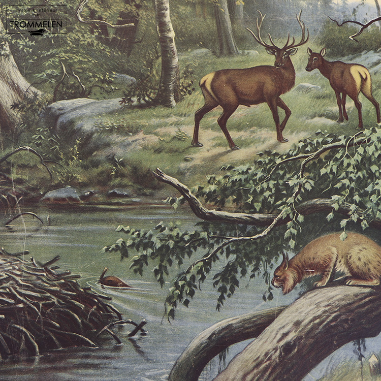 Antieke schoolplaat: woudbewoners