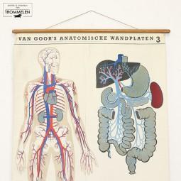 Anatomische wandplaat #3