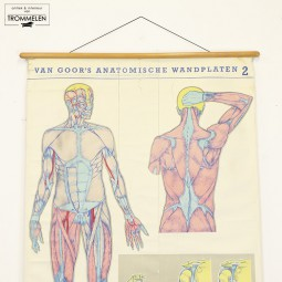 Anatomische wandplaat #2