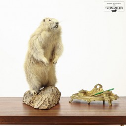 Taxidermie